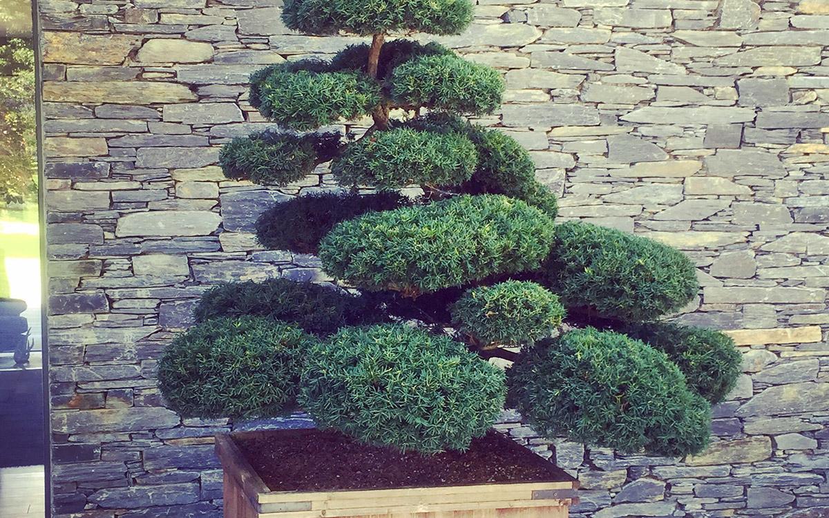 Contemporary Garden Holywood - Johnny Knox Garden Design ...