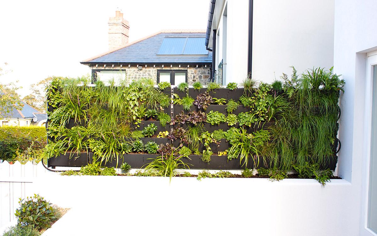 Green Wall - Johnny Knox Garden Design | Belfast ...