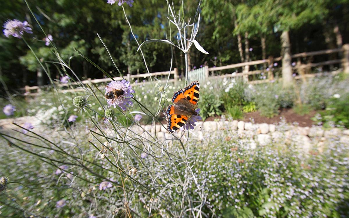 Traditional garden ballynahinch johnny knox garden for Garden design northern ireland